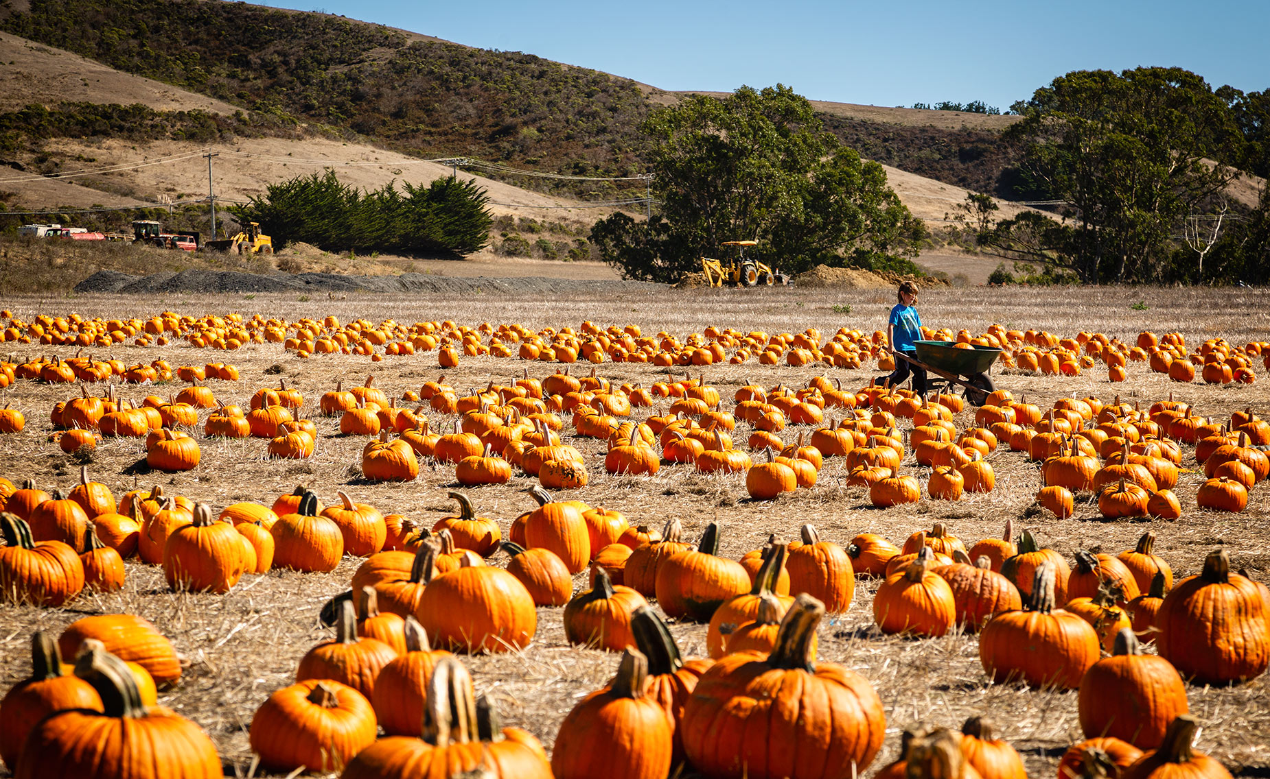 Highway One Pumpkin Patch for Halloween