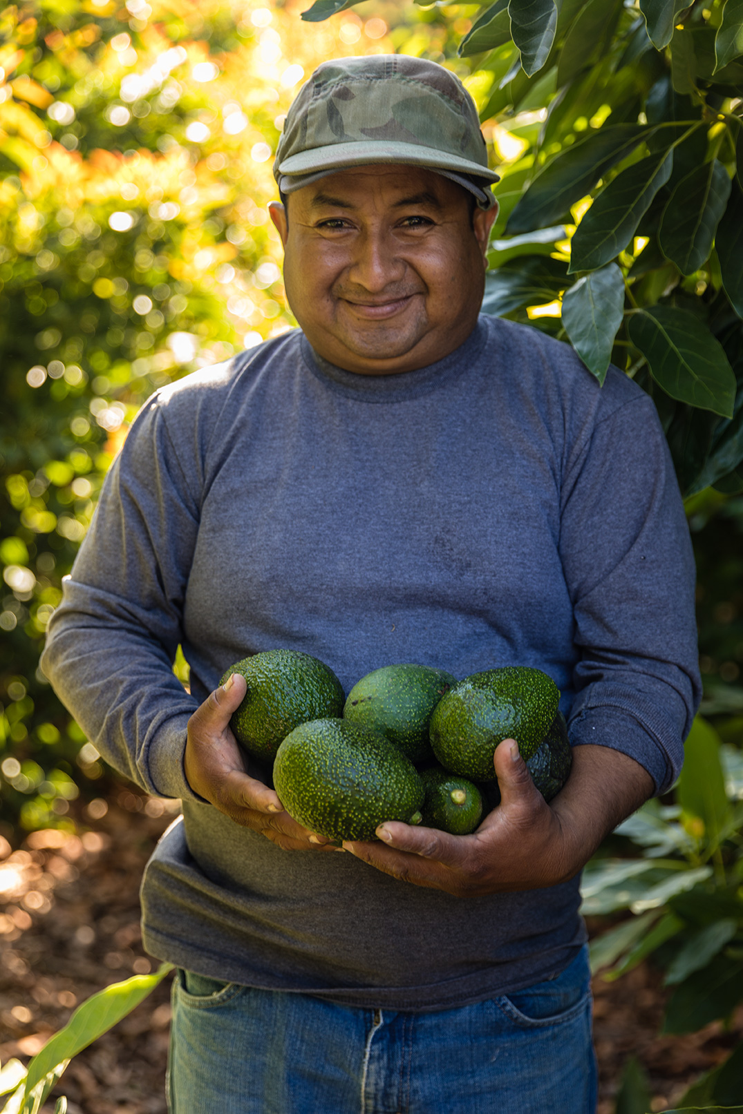 Farmer with his avocados at the Refugio Farm in Goleta CA
