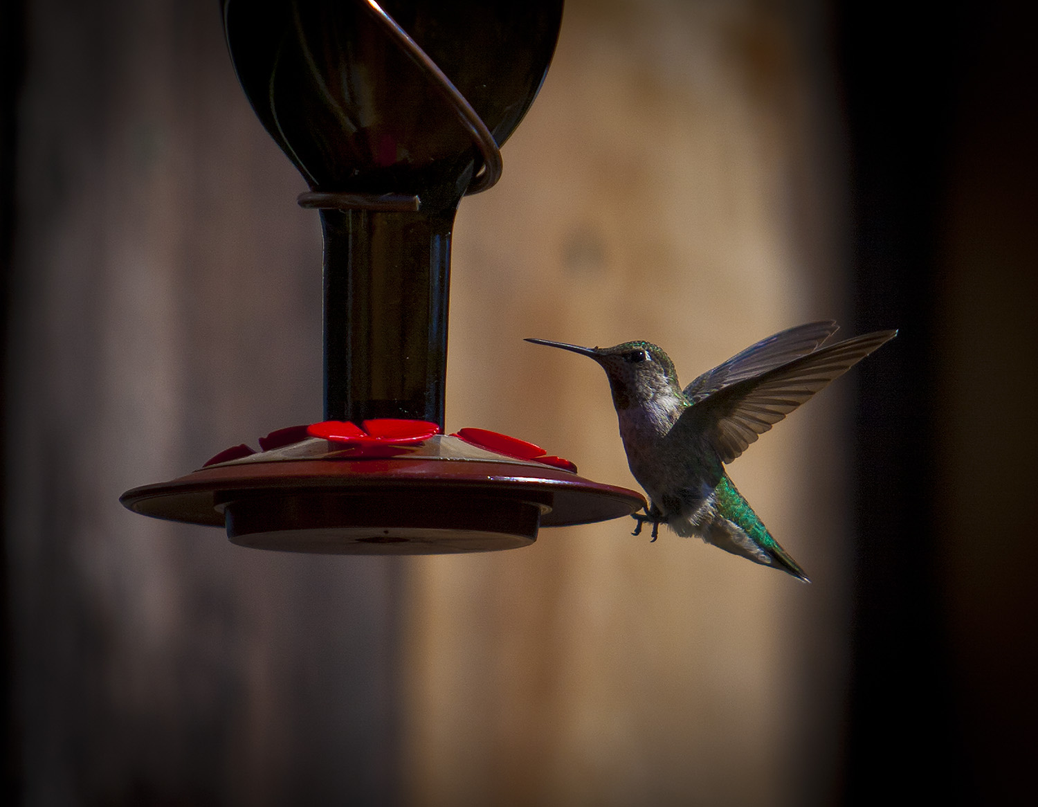 Hummingbird at Moshin Vineyards
