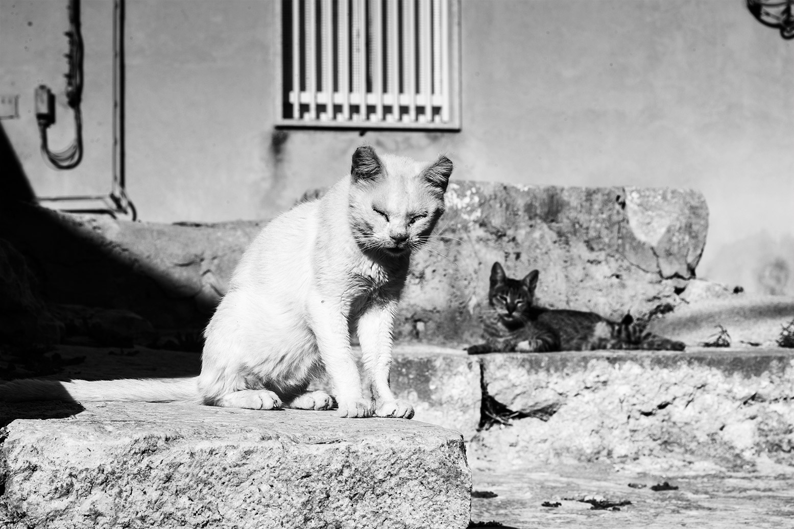 Cats in Ragusa