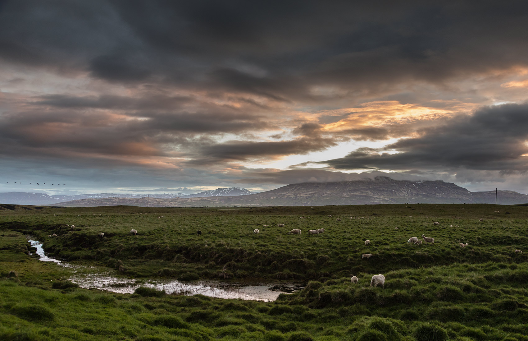 Iceland landscape is naturally green and beautiful