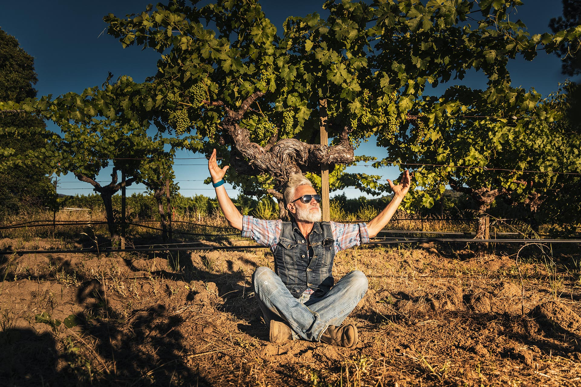 Wine Photographer: Marco Simonit Master of pruning in Napa Valley