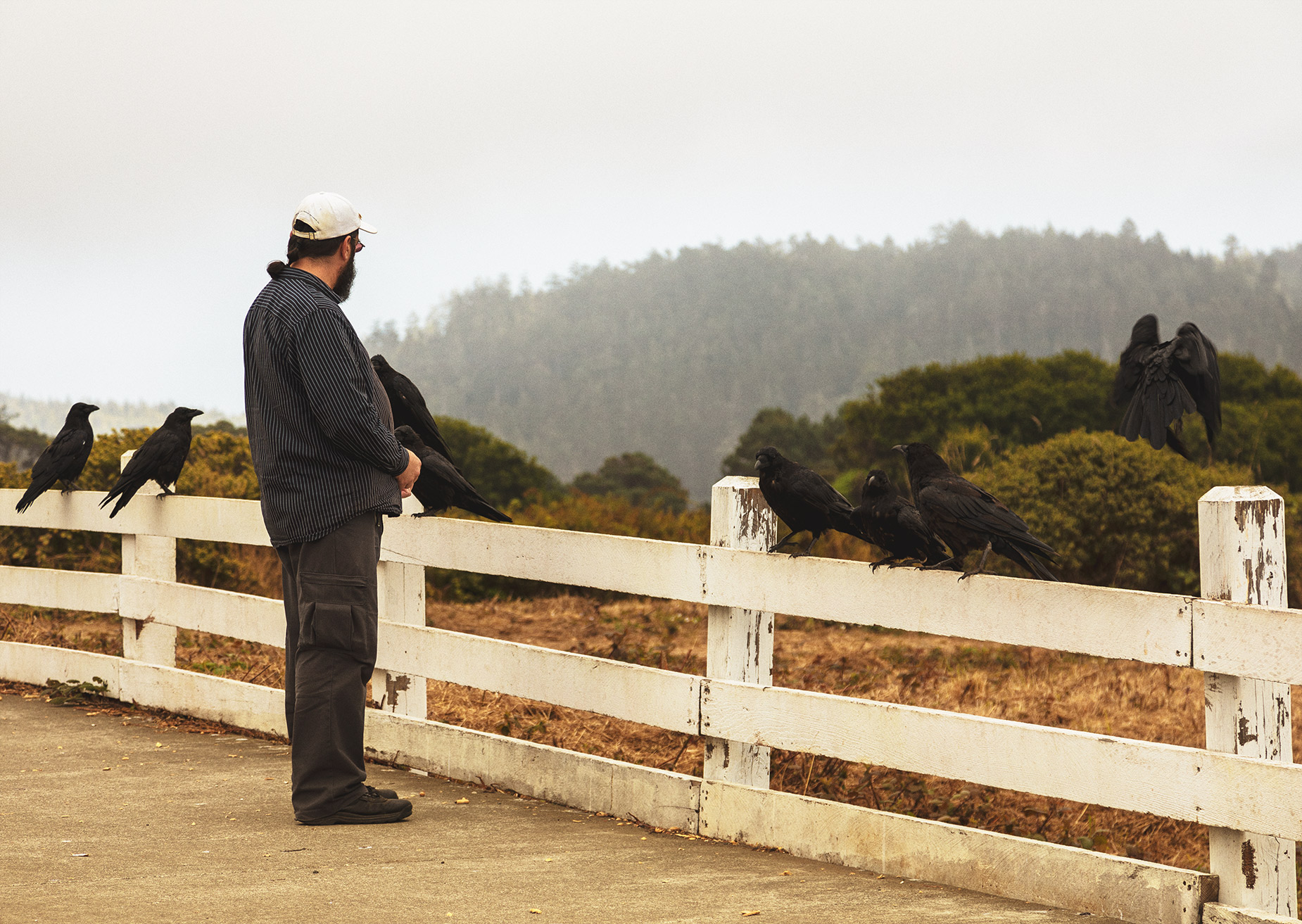 Mendocino man feeding local crows