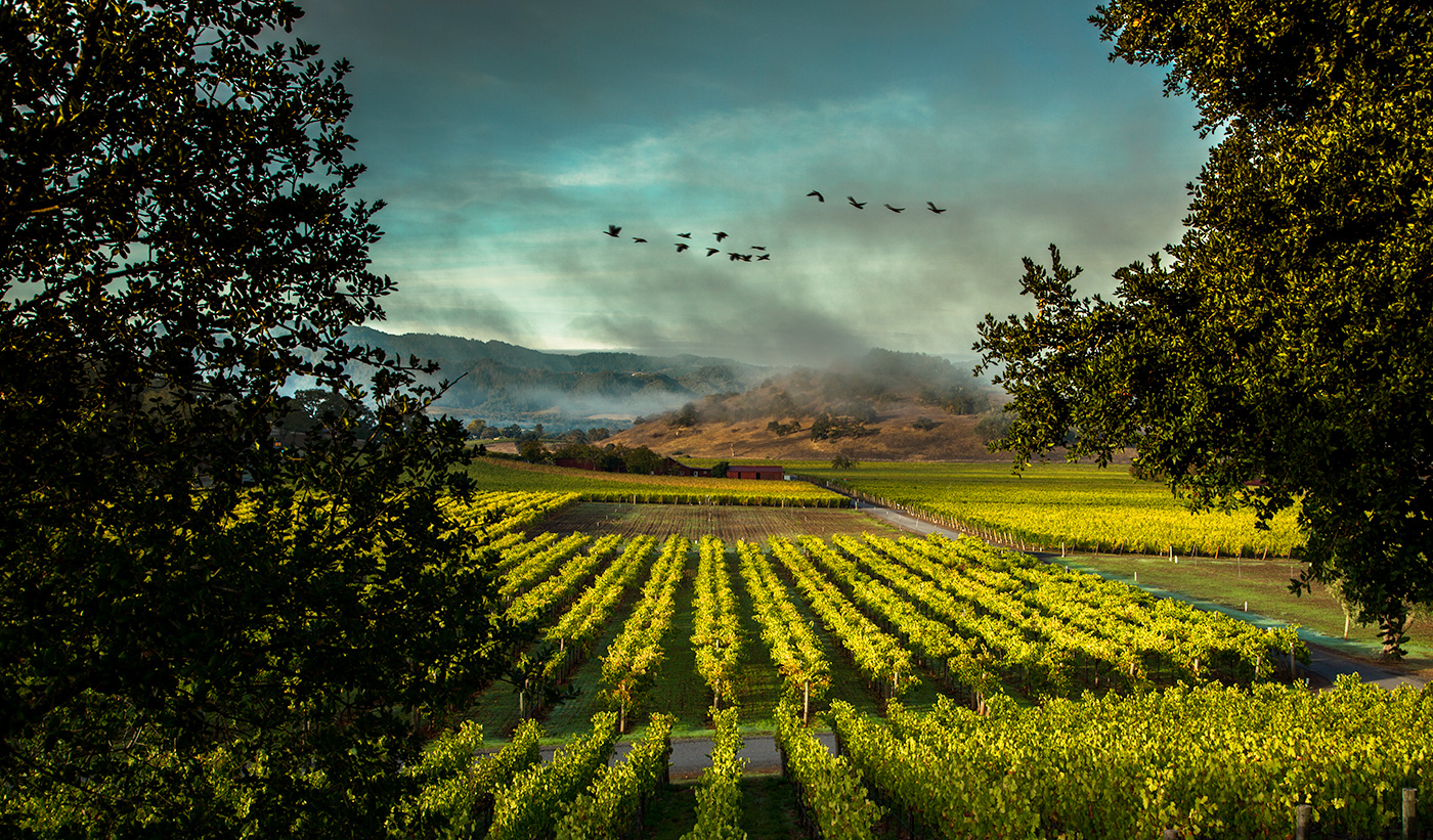 Silverado Trail, Napa Valley. Vineyards Landscape
