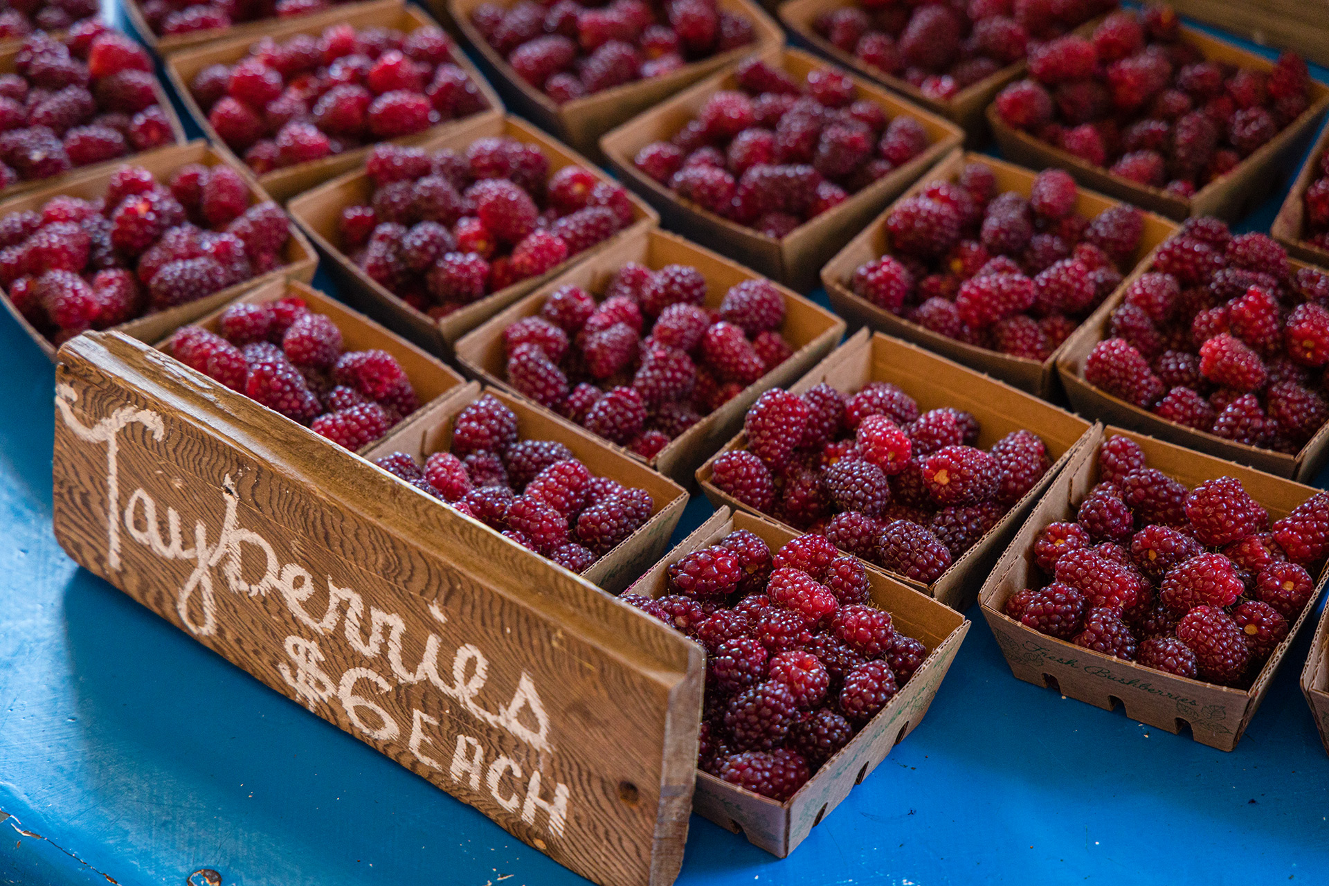 Tayberries-pacific-coast-farm