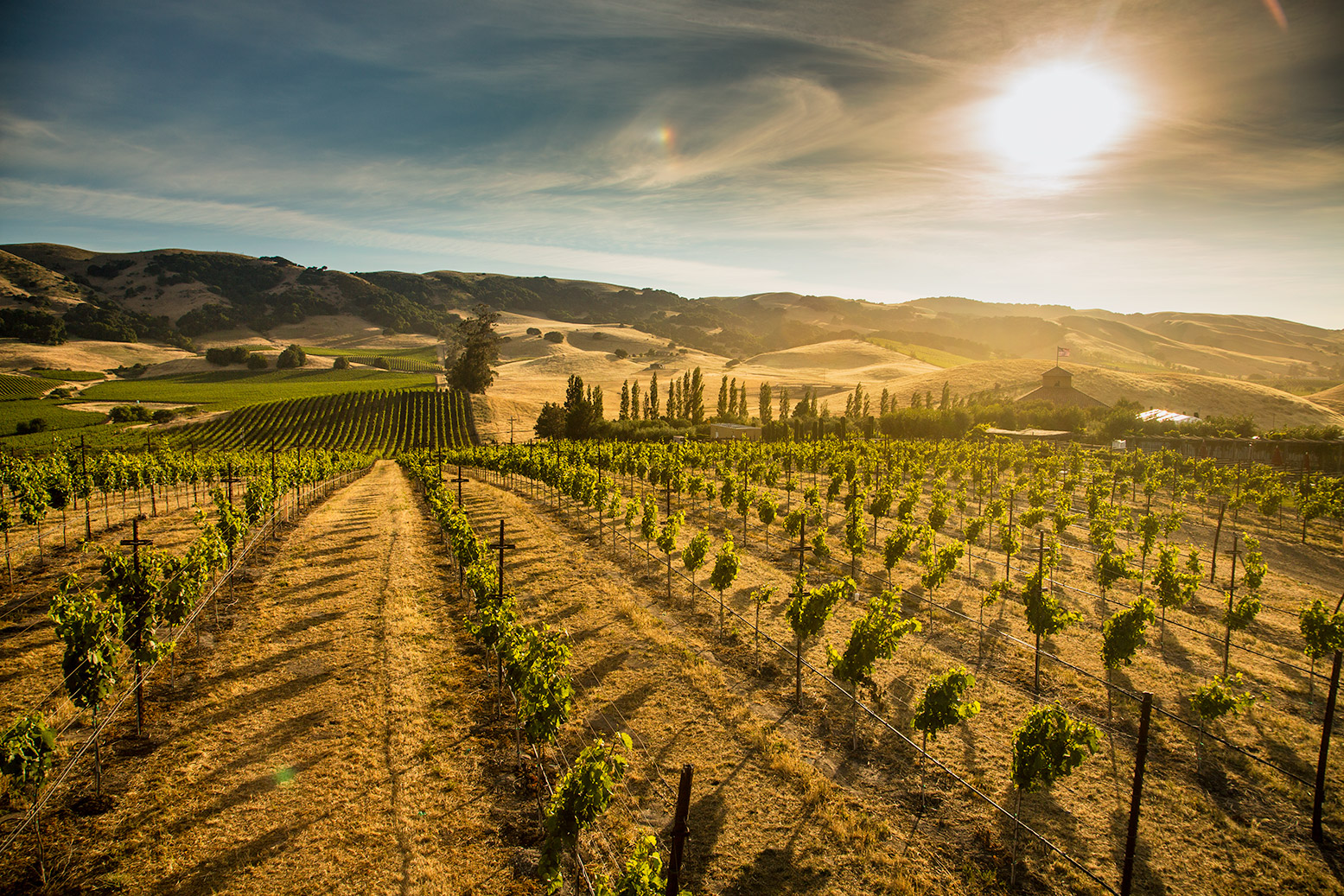 Viansa Winery - Vineyards at Sunset: Rocco Ceselin Photography