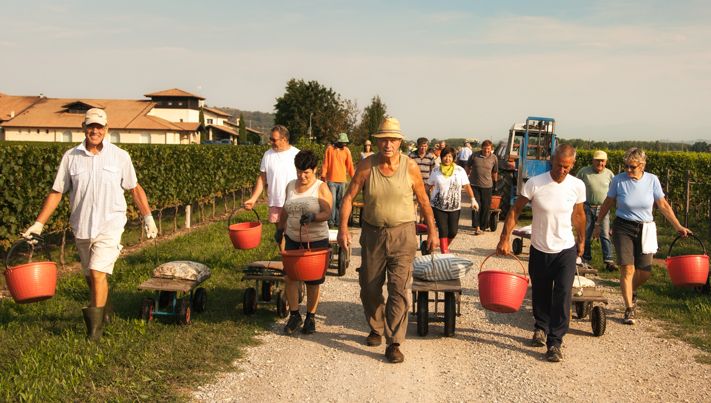 Vie di Romans. Friuli. Harvest Time