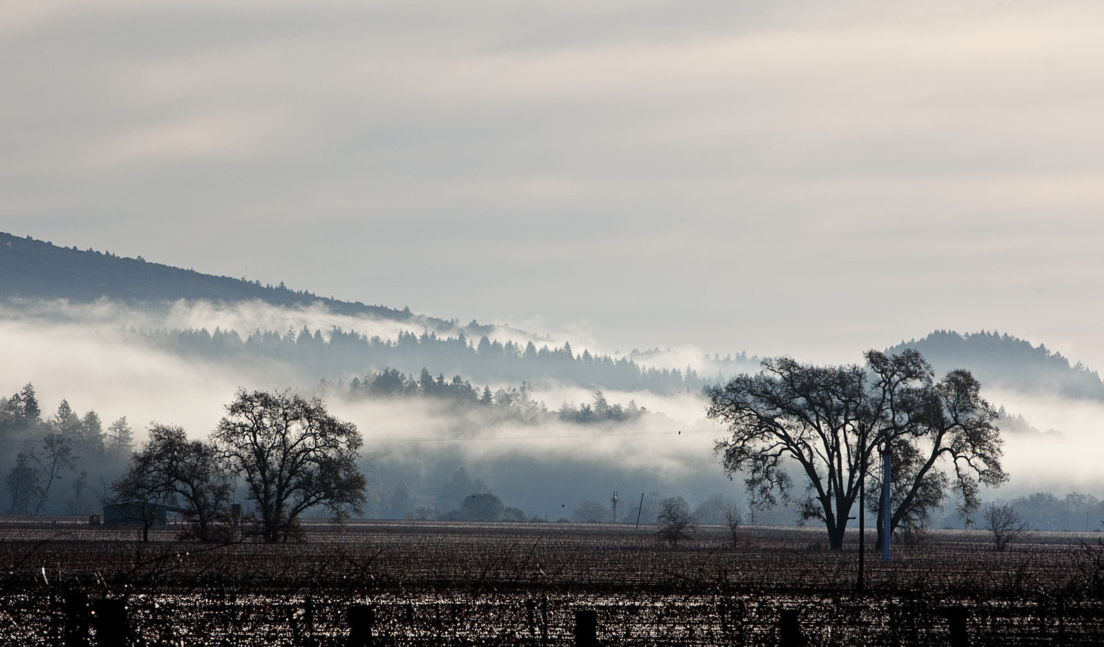 Calistoga Vineyards in Winter, Napa Valley: : Rocco Studio Photography